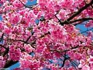 stagione_primavera_048x