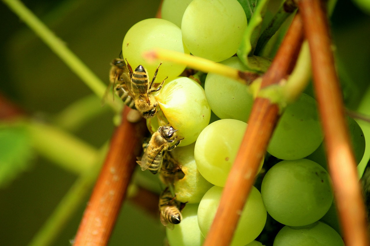 api uva